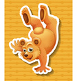 Grizzly bear doing one handstanding vector image vector image
