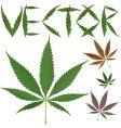 marijuana leafs vector image