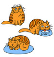 orange cats emoticons set isolated vector image vector image