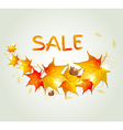 Abstract autumn background with orange maple leave vector image