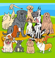 purebred dogs cartoon characters group vector image vector image
