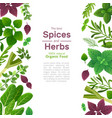 spices and herbs basil mint spinach coriander vector image vector image
