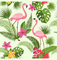 seamless pattern with flamingo tropical vector image