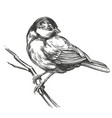 bird titmouse on a branch hand drawn vector image vector image