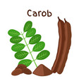 carob pods beans powder leaves superfood vector image vector image