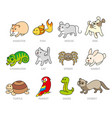 pet shop set types of pets vector image vector image