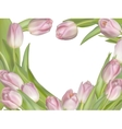 Tulip flowers on white background EPS 10 vector image vector image