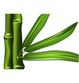 bamboo isolated vector image vector image