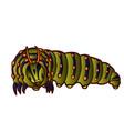 black swallowtail caterpillar vector image