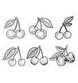 cherry set line art sketch vector image vector image