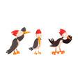 funny woodpecker bird character set comic vector image vector image