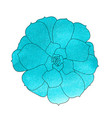 succulent plant echeveria watercolor top view vector image