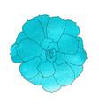 succulent plant echeveria watercolor top view vector image vector image