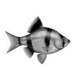 halftone fish vector image