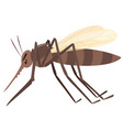 mosquito flying on white background