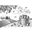 Apple harvest landscape black and white vector image vector image
