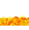 Autumn banner template with maple leaf vector image