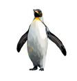 emperor penguin from a splash watercolor vector image vector image
