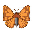 night moth on white background vector image vector image