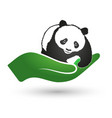 panda in hand symbol of ecology and nature vector image
