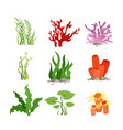 set of colourful water plants vector image vector image