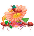 group ants and flowers vector image