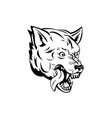 head an aggressive and angry gray wolf grey vector image