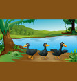 scene with three black ducks river vector image vector image