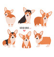 set of welsh corgi in different postures small vector image vector image