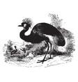 balearic crane vintage vector image vector image