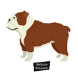 dog collection english bulldog isolated object vector image vector image