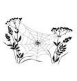 monochrome big spider on web vector image vector image