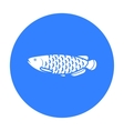 Scleropages fotmosus fish icon black Singe vector image vector image