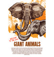 african animals elephants zoo poster vector image vector image