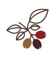 coffee tree branch with leaves vector image