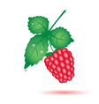 colorful raspberry summer fruit with leaf eps10 vector image vector image