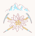 edelweiss alpenstock mountains flower symbol vector image vector image