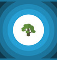 isolated oak flat icon tree element can be vector image vector image