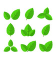 leaves set icons vector image vector image