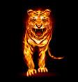 fire tiger on black background for design vector image