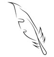 Feather sketch on white background