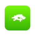 sea bass fish icon digital green vector image