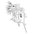daphnia vintage vector image vector image
