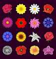 set spring or summer flower blossom isolated vector image