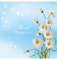 Beautiful white daisies vector image