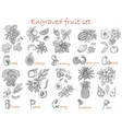 design set with fruits botanical collection vector image