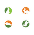 rabbit logo template vector image vector image