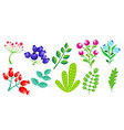 colorful floral elements vector image