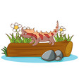 lizard on white background vector image vector image