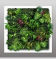 vertical garden vector image